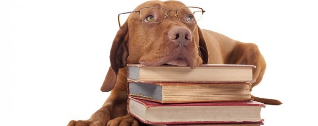 2087_dog-laying-head-on-a-pile-of-books-by-Barna-Tanko-628x250